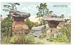 Mushroom Park,CO, Toad and Toadstools Postcard