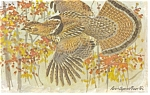Click here to enlarge image and see more about item p7442: Ruffed Grouse Postcard p7442