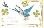Click here to enlarge image and see more about item p7459: St Patrick's Day Postcard Bluebird and Shamrocks 1907