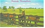 Click here to enlarge image and see more about item p7965a: Kentucky Thoroughbreds Postcard p7965a