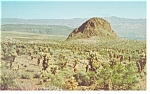 Click here to enlarge image and see more about item p7975: Nevada Teddy Bear Cholla Forest Postcard