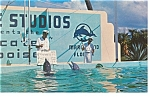 Marineland FL Trained Porpoises Postcard p7990