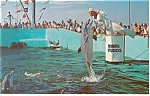 Click here to enlarge image and see more about item p8009: Marineland FL Feeding Time Postcard p8009