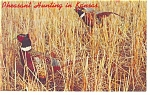 Click here to enlarge image and see more about item p8056: Pheasant Hunting in Kansas Postcard