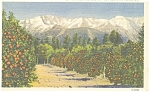 Click here to enlarge image and see more about item p8091: Oranges and Snow Capped Mountains Postcard