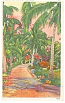 A Florida Typical Tropical Trail Postcard p8105