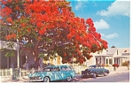 Key West FL Cars 50s and Poinciana Tree Postcard p8114