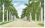 Ft Myers FL View of First Street Postcard p8144