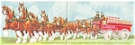 Click here to enlarge image and see more about item p8602: Budweiser 8 Horse Hitch Postcard p8602