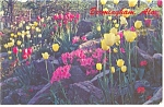 Click here to enlarge image and see more about item p8714: Birmingham Alabama Vestavia Hills Flowers Postcard p8714