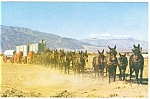 20 Mule Team, Death Valley, CA Postcard