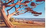 Palisades Park, Santa Monica, CA,  Postcard