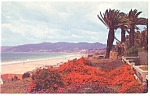 Flower Covered Palisades Santa Monica CA  Postcard p8866