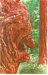 The Old Man Burl, A Redwood Burl Postcard