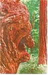 The Old Man Burl, A Redwood Burl Postcard