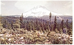 Mt Hood, Oregon Rhododendron Time Postcard