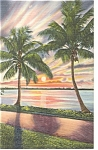 Coconut Palms and Florida Sunset Linen Postcard