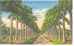 Avenue of Royal Palms, FL Linen Postcard