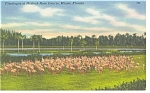Click here to enlarge image and see more about item p9030: Miami FL Hialeah Race Course Linen Postcard p9030