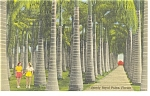Click here to enlarge image and see more about item p9080: Royal Palms at McKee Jungle Gardens  FL Linen Postcard p9080