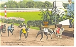 Click here to enlarge image and see more about item P9100: Greyhound Racing FL At the Finish Line Linen Postcard P9100
