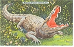 Click here to enlarge image and see more about item p9103: Florida Alligator Linen Postcard p9103