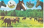 Click here to enlarge image and see more about item p9407: Morgan Horses of Vermont Postcard p9407