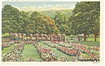 Reading ,PA, Municipal Rose Garden Postcard