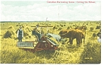 Click here to enlarge image and see more about item p9664: Canadian Harvesting Scene with Horses Postcard