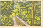 Anderson, SC Tree Lined Road Linen Postcard