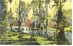 Click here to enlarge image and see more about item p9948: Charleston,SC, Magnolia Gardens Postcard 1912