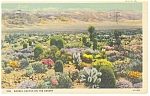 Barrel Cactus on the Desert Postcard 1937