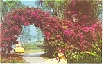 Click here to enlarge image and see more about item p9978: Cypress Gardens, FL, Bougainvillea Arbor Postcard
