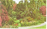 Click here to enlarge image and see more about item p9985: St Petersburg,FL, Sunken Gardens Postcard