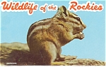 Click here to enlarge image and see more about item sf0136: Wildlife of the Rockies Souvenir Folder