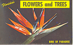 Florida's Flowers and Trees Souvenir Folder