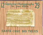 Click here to enlarge image and see more about item sf0386: Santa Cruz Big Trees