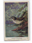 Click here to enlarge image and see more about item t0041: Audubon Water Thrush  Card t0041