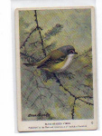 Click here to enlarge image and see more about item t0043: Audubon Blue Headed Vireo Card t0043