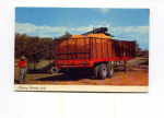 Click here to enlarge image and see more about item t0135a: Mining Florida Gold Postcard