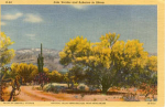 Click here to enlarge image and see more about item t0143: Palo Verde and Sahuaro Postcard t0143