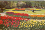 Click here to enlarge image and see more about item v0151: Holland in Bloom Postcard