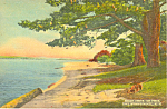 Beach Lake Winnipesaukee ,NH Postcard
