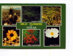 Click here to enlarge image and see more about item x0019: Texas Wildflowers Postcard