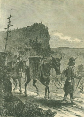 Army Of The Cumberland, Negro Teamster Leading Pack Mules